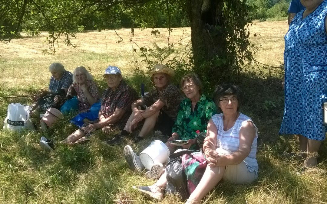 Оброк 2017 година в село Черешовица